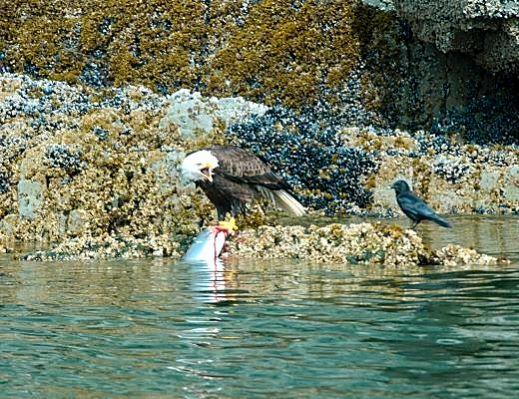 bald eagle salmon ... too many young girls and even older women are critical of their looks.