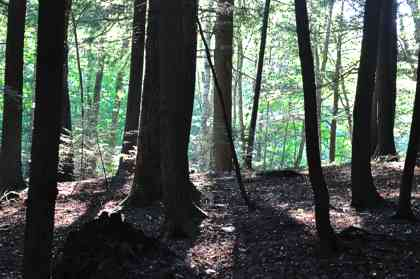 privatization of forests The union tribal affairs ministry has criticised the environment ministry's draft national forest policy, contending that it will promote the privatisation of forests and undermine the rights of.