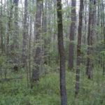 No Ash trees in our national forests? Say it ain't possible