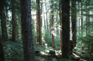 Trail to Yakso Falls