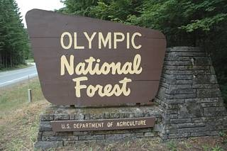 Olympic National Forest Campgrounds