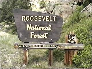 Roosevelt National Forest