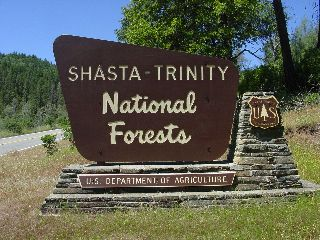 Trinity National Forest